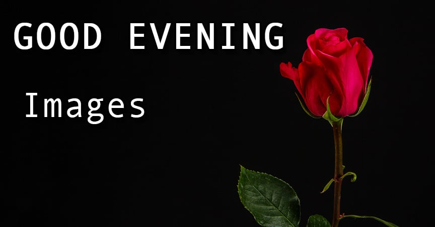 30 Good Evening Image With Red Rose Lovely Good Evening Images Hd